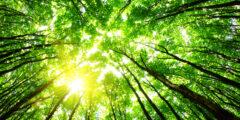 معلومات عن البيئه ومكوناتها وحلول مشكلة التلوث البيئي